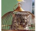 cage-oiseaux